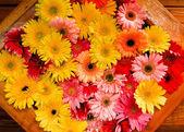 Marigolds — Fotografia Stock