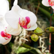 Orchid in the garden at thailand - Stock Photo
