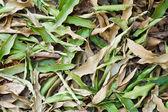 Suche liście tło — Zdjęcie stockowe