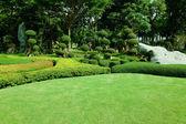 Belo jardim. gramado verde — Foto Stock