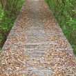 Mangrove Way — Stock Photo #10019255