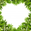 Heart shaped leafs — Stock Photo #10019438