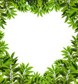 Heart shaped leafs — Stock Photo