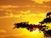 Cielo dorado — Foto de Stock