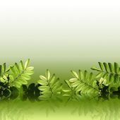 Green foliage — Stock Photo