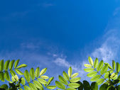 зеленые листья — Стоковое фото
