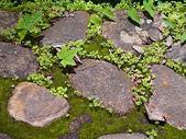 Tierra de verdor — Foto de Stock