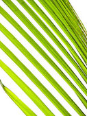 Coconut leaf — Stock Photo