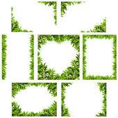 Natural green leaf frame — Stock Photo