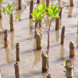 Stock Photo: Reforestation