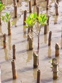 Reforestation — Stock Photo