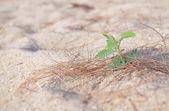 Mladá rostlina — Stock fotografie