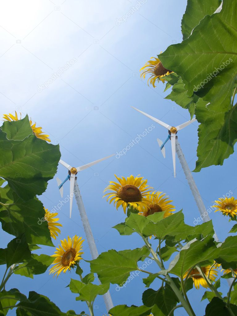 Windmill with sunflowers and pure fresh air — Stock Photo #9621892