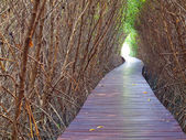 Underpass of dead trees — Stock Photo