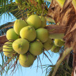 Clusters of coconuts — Stock Photo