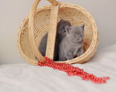 Cat and basket — Stock Photo