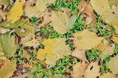 Autumn leaf on a grass — Stock Photo