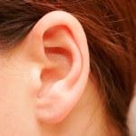 The Ear — Stock Photo