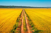 Beautiful yellow fields with a blue sky — Stock Photo