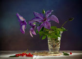 "Still Life ""Clematis"" — Stock Photo"