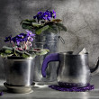 Stock Photo: Still life with tea-pot and violet
