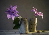Bodegón con una flor lila — Foto de Stock