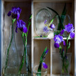 Shelf with blue flowers - Stock Photo