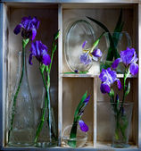Shelf with blue flowers — Stock Photo