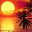 Red sunset and palm — Stock Photo #9256036