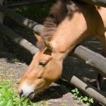 Horse — Stock Photo #9256336