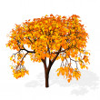 Stock Photo: Autumn tree