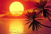 Red sunset und palm — Stockfoto