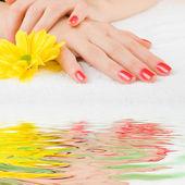 美しい女性の手のためのケア — ストック写真