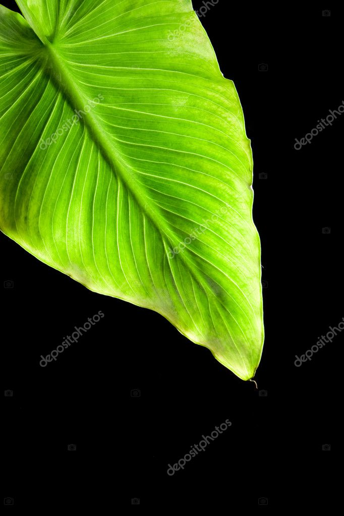 Plant on black background — Stock Photo #9256202