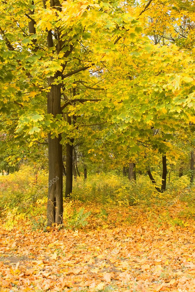 Autumn forest — Stock Photo #9257795