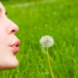 Young girl blowing on the dandelion — Stock Photo