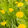 Stock Photo: Dandelion by springtime and bee