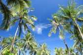 Beautiful tropical palms on the sky background — Stock Photo