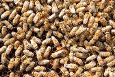 Viele Bienen auf der Wabe — Stockfoto