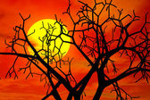 Red sunset in haloween day — Stock Photo