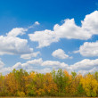 Stock Photo: Autumn forest and blue sky