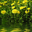 Dandelion by springtime - Stock Photo