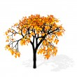 Autumn tree — Stock Photo #9866777