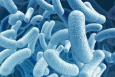 Illustration of the bacillus microorganisms — Stock Photo