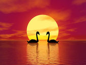 Red Sunset and swans — Stock Photo