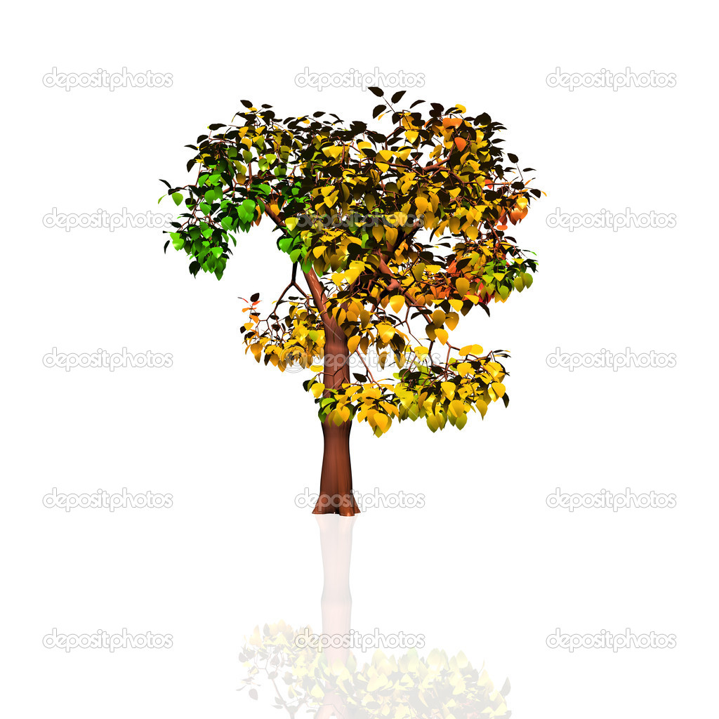 Autumn tree — Stock Photo #9868762