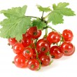 Red currant — Stock Photo #9251267