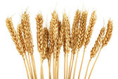 Golden Grain — Stock Photo