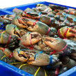 The Sea crab in the market — Stock Photo