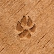 The Dog's footprinted on cement floor background — Stock Photo